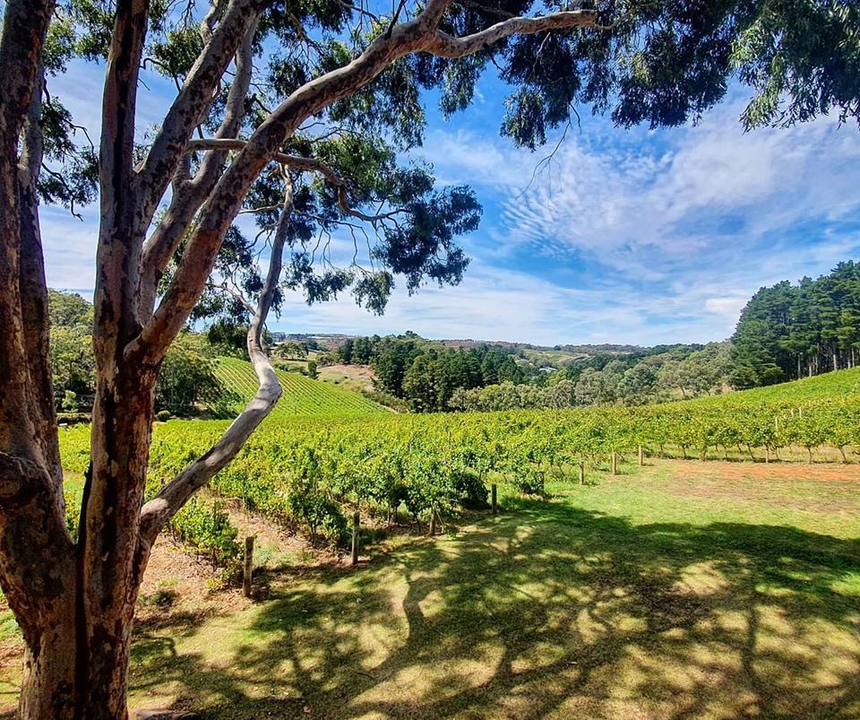 Adelaide winery, SA