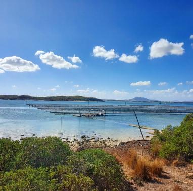 Coffin Bay Oyster Farm, SA